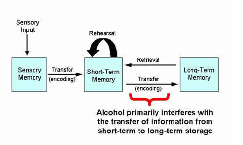 alcohol_and_memory